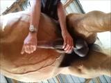 Masturbando a un caballo